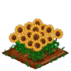 Sunflowers-super