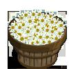 White Asters Bushel-icon
