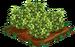 Green Hellebores 100