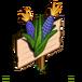 Posole Corn