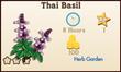 Thai Basil Market Info
