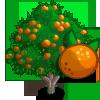 Bitter Orange Tree-icon