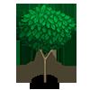 Pencil Cedar Tree-icon
