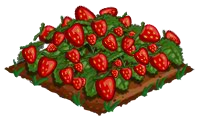Super Berries 100