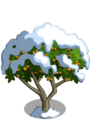 Apricot Tree8-icon.png