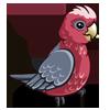 Australian Galah Parrot-icon