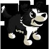 Border Collie Puppy-icon
