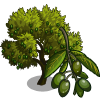 Lucques Olive Tree-icon