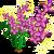 Fairy Flower Full Bloom-icon