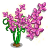 Fairy Flower Full Bloom-icon