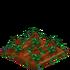 Poinsettia66