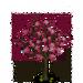 Ume Tree-icon