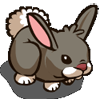 Cottontail Rabbit-icon