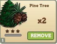 Pine Tree Mastery