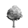 Charcoal Shade Tree-icon