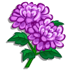 Chrysanthemum-icon