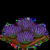 Lavender-bloom