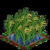 Rice-bloom