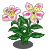 Alstroemeria Lily (Spring Basket)-icon