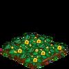 PattypanSquash-66