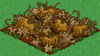 Pumpkin withered