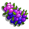 Juniper Berries-icon