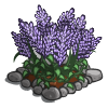 Russian Sage-icon