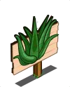 Aloe Vera Mastery Sign-icon