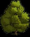 Bay Laurel Tree1-icon