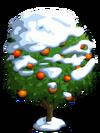 Blood Orange Tree8-icon