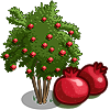 PomegraniteTree-icon
