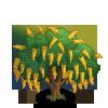 Common Laburnum Tree-icon