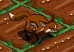 Füchse Feld