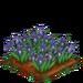 Iris 100