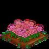 PinkRoses-super