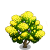 Black Wattle Tree-icon