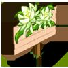 Night Cereus Mastery Sign-icon