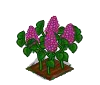 Perfect Lilac-icon