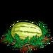 Super Yellow Melon 100