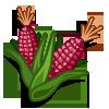 Sweet Corn (Sweet Seeds for Haiti)-icon