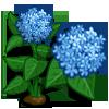 Hydrangea-icon