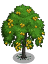 Indian Laurel Tree2-icon