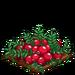 Super Cranberry 100