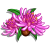 Brown Knapweed-icon