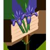 Iris Mastery Sign-icon