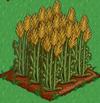Wheat 100
