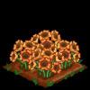 Sun poppies extra100
