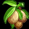 Sapodilla-icon