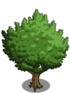 Hazelnut Tree1-icon
