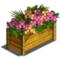 Orchid Flower-icon